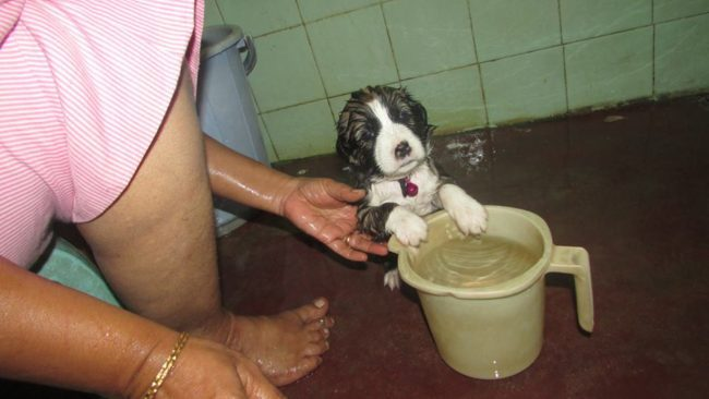 KISES stray dogs puppy, animal welfare, rescue, shelter, dogs,