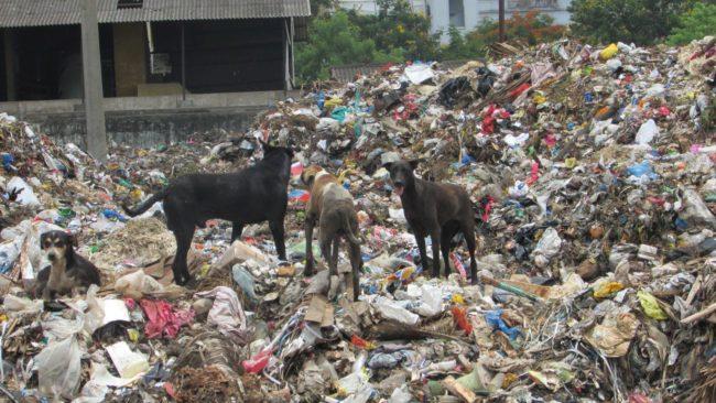 KISES India charity stray dogs