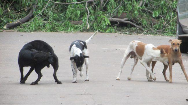 KISES animal rescue, stray dogs, vijayawada, india, rescue centre,