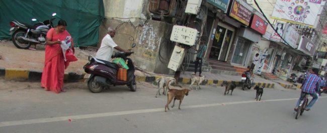 KISES stray dogs city